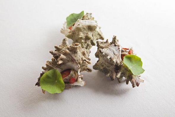 Caracoles de mar en su concha. Foto tomada de Twitter | Usuario @Rosetta...
