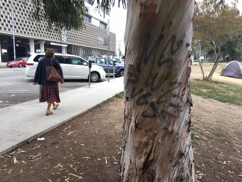 Grafiti de la Mara Salvatrucha en un árbol del parque MacArthur en el ba...