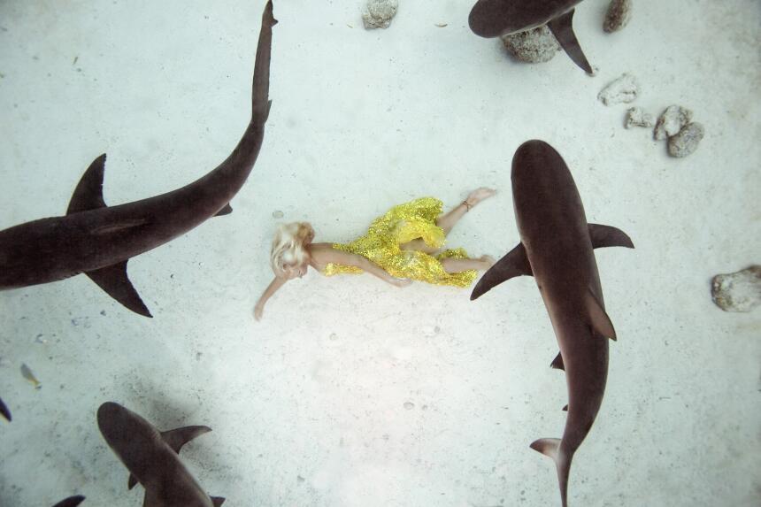Un glamuroso baile con tiburones
