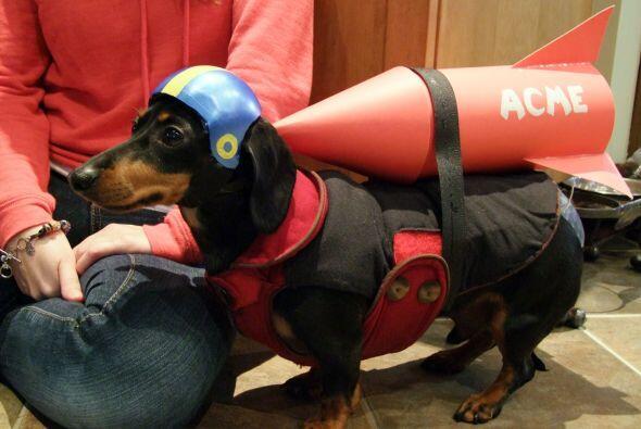 Si estás pensando en cómo disfrazar a tu mascota este Halloween…