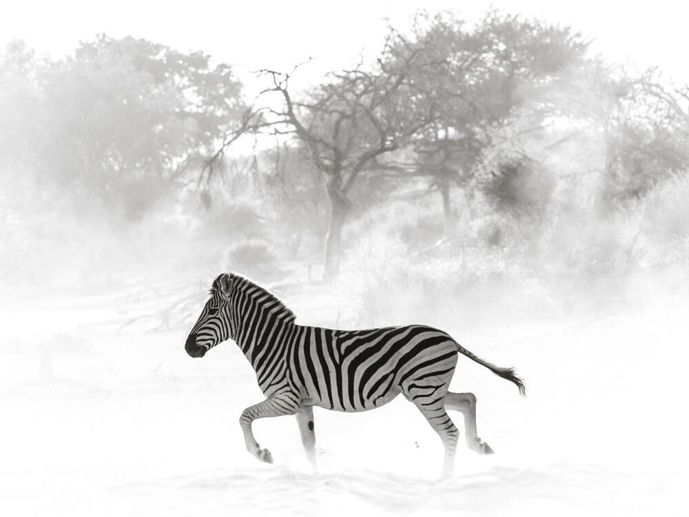 En fotos: El lado más salvaje de África retratado por una fotógrafa bras...