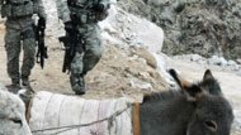Guerrillero de las FARC fue acusado de usar burro-bomba donde murieron 1...