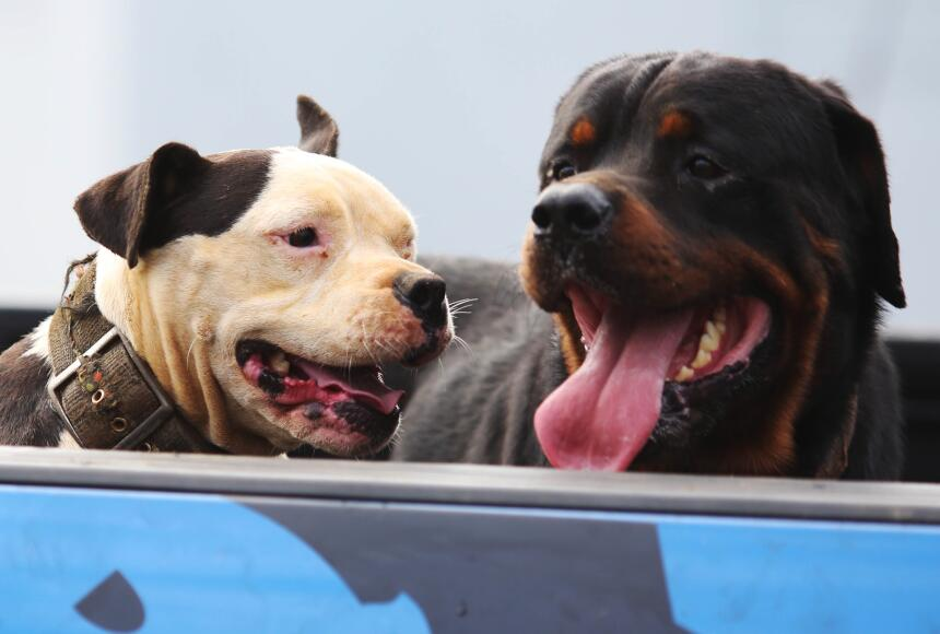 puerto rico vacunas mascotas