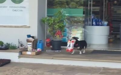 El videíto: Nada hace más feliz a este perrito que recoger su propia com...