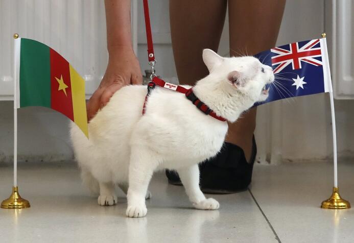 El 'gato oráculo' de la Confederaciones, el nuevo animal con 'poderes' e...