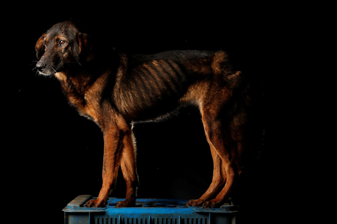 Starving dogs of Caracas