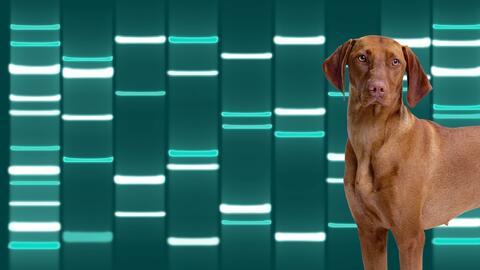 El ADN se traduce en una serie de líneas distribuidas en nueve co...