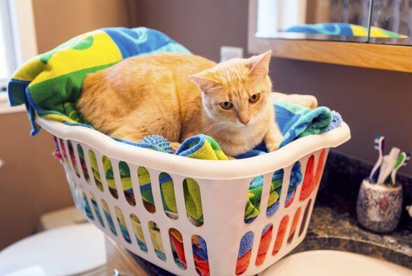 Suavizante para ropa líquido. A veces, contienen detergentes catiónicos,...