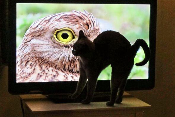 Sus dueños se divierten con las reacciones de Coco en el televisor.