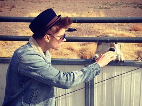 """""""Esto no es un perro""""-Justin Bieber."""