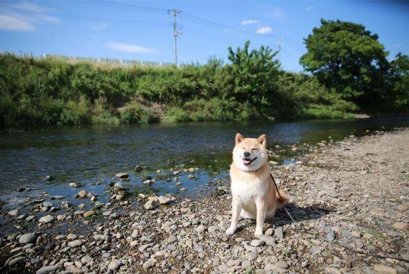 Ono no deja pasar ni una sola oportunidad para fotografiar a Maru, pues...