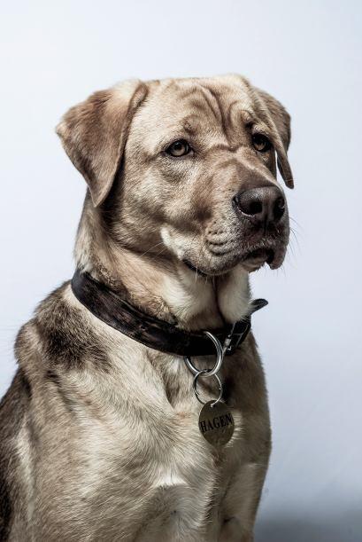 Hagen es vendido a personas que entrenan a perros de pelea, convirtiendo...