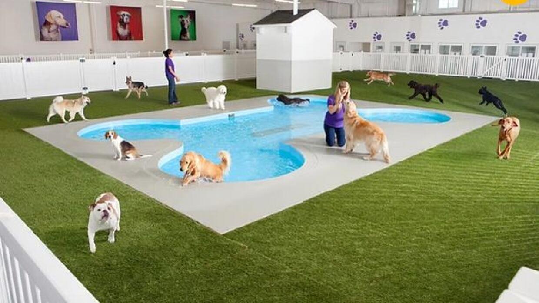 Terminal de animales