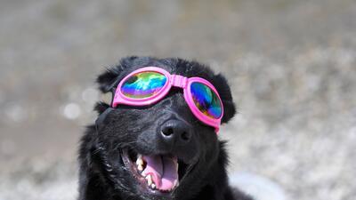 Las mascotas también vieron el eclipse solar