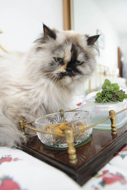 Y ni qué decir de las bolsas de comida para gato que tienen un costo par...