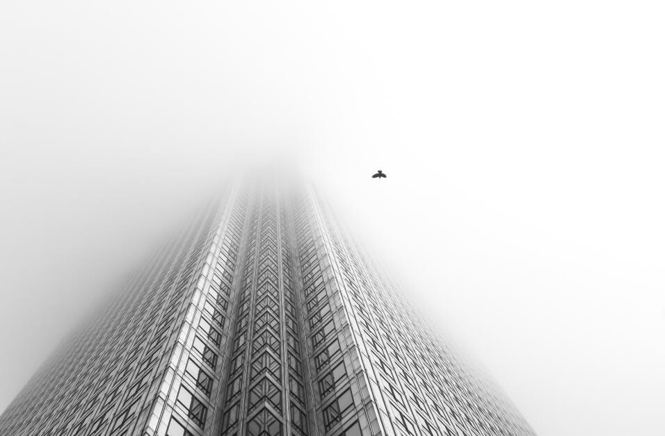 'Pájaro libre', fotografía tomada en Londres, Inglaterra. Ganador de la...
