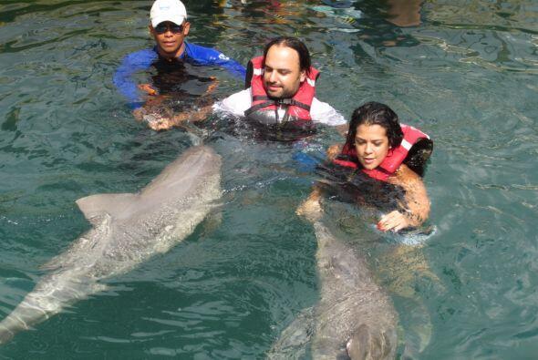 Constantemente viajan a Colombia. Aquí jugando con los delfines en Santa...