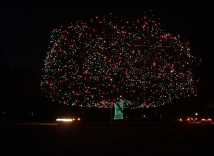 La ciudad lo considera como la tradición de encendido del árbol más anti...