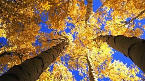 Parques Nacionales Estados Unidos ar.jpg