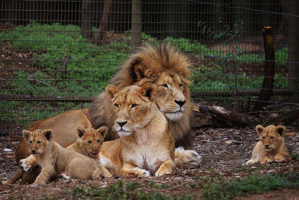 A los jóvenes 'gatitos' les gusta estar en familia, pero también quieren...