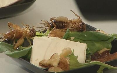 Insectos, la deliciosa comida del futuro