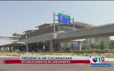 Cucarachas en establecimientos del aeropuerto de Sacramento