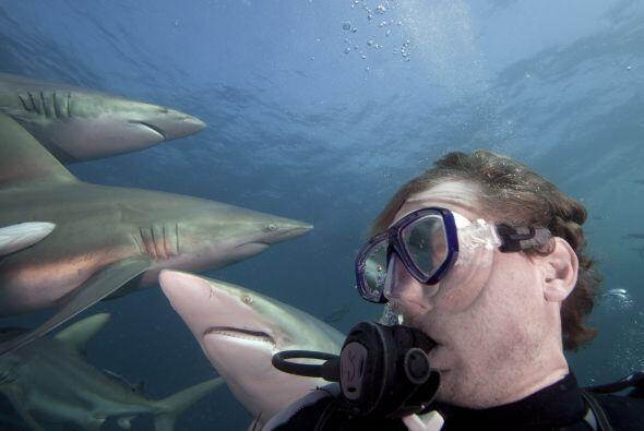 Pero no llegó a ese lugar lleno de tiburones por casualidad.