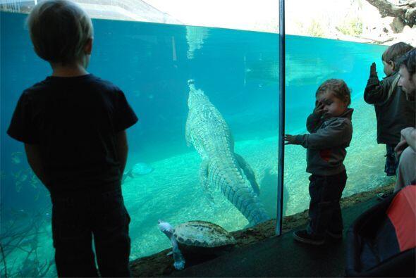 Por otro lado, el Herpetario del zoológico de Fort Worth es reconocido p...