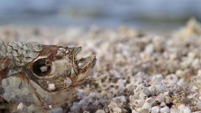 Salton Sea, el mar muerto de California