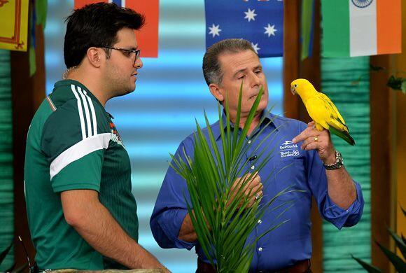 Llegaron algunos animales representativos de Brasil, como este periquito...