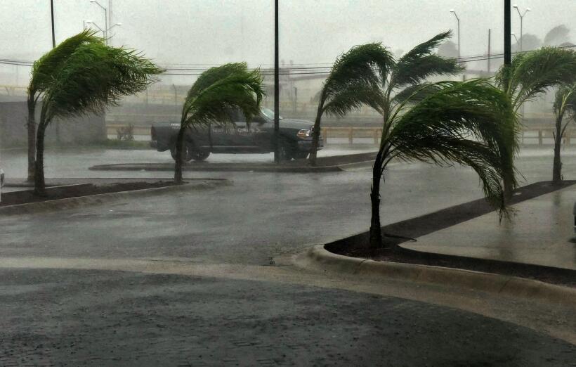 Las palmeras de Manzanillo, en Colima, resisten a las fuertes rachas de...
