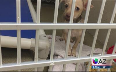 Ayuda para animales abandonados o extraviados