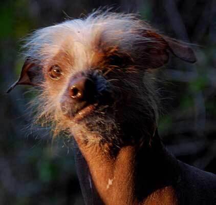 Unos 24 perritos participaron del concurso.  El ganador fue Quasi Modo,...