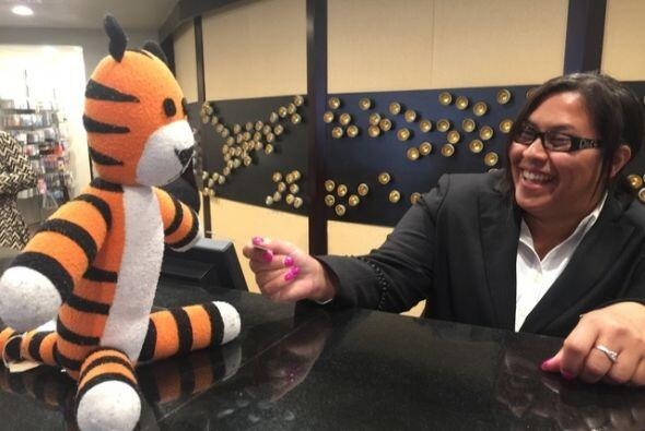 Mientras espera por su pequeño dueño, Owens, el tigre Hobbs paseó por el...