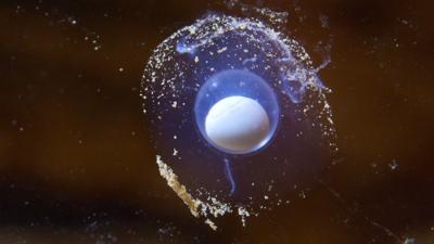 """Los minúsculos huevos de """"dragones"""" que atesora Eslovenia Screen%20Shot%..."""