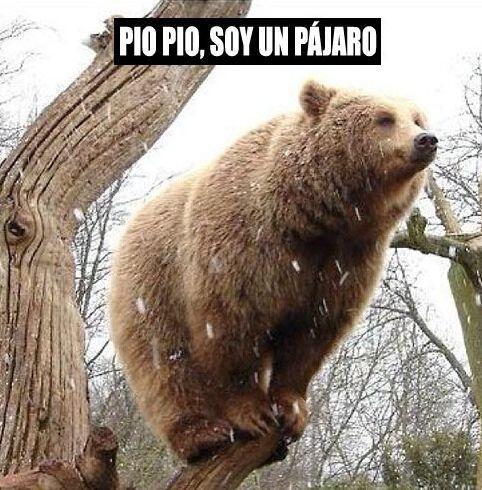 """""""Pío pío, soy un pájaro""""."""