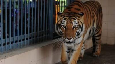 Tras el hallazgo de los animales las autoridades notificaron el descubri...