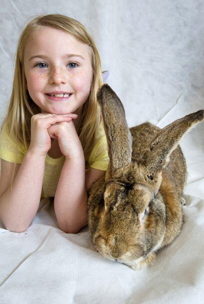 A los conejos les gusta pasear y brincar sobre el pasto.