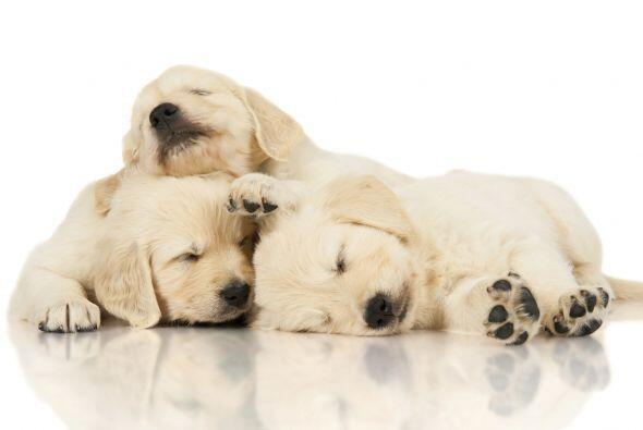 ¡Arriba perezoso! Los cachorros duermen ¡hasta 18 horas por día!