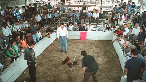 Las peleas de gallos son especialmente populares en los estados occident...