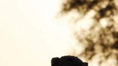 """Temen """"tragedia tras el retiro de las tropas estadounidenses en Irak""""."""
