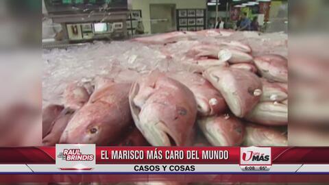 La oreja de mar es el marisco más caro y sabroso del mundo