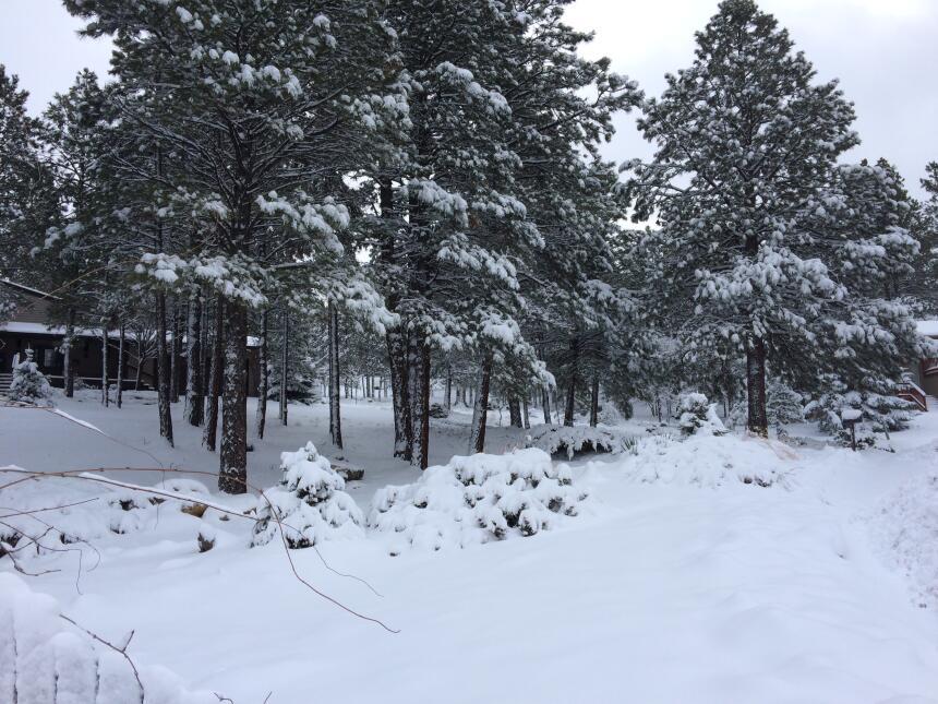 En fotos: La ciudad de Flagstaff amaneció cubierta de nieve IMG_3792.JPG