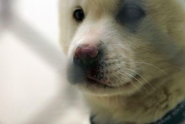 El comercio de carne de perro es una actividad que continua en algunas á...